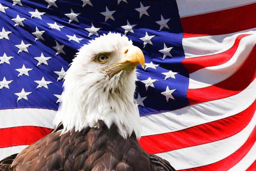 eagle-219679_1280