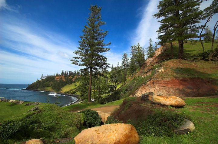 1200px-norfolk-island-pines
